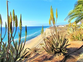 Fuerteventura is famous for its pristine coastline and arid landscapes
